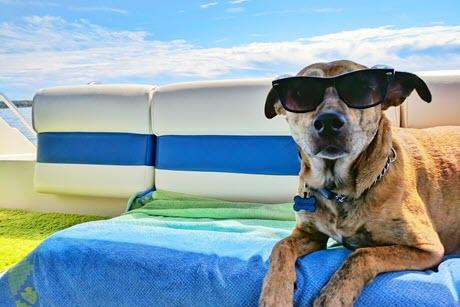 Dog wearing sunglasses while relaxing on a boat