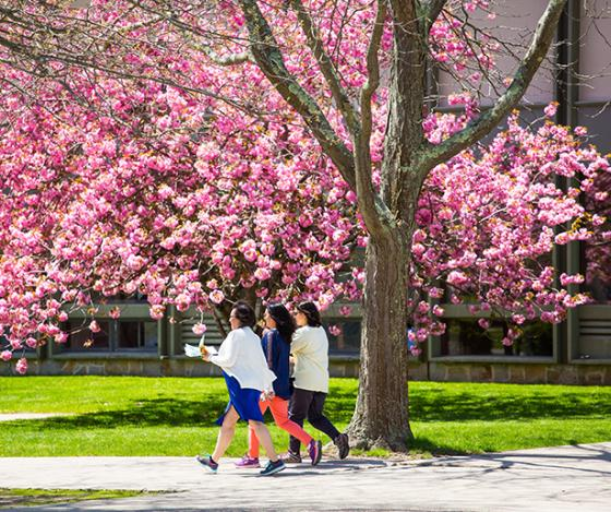 Women walking on campus in front of a tree with pink flowers